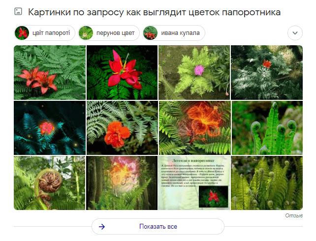 Спецэлемент поисковой выдачи Google «Изображения»