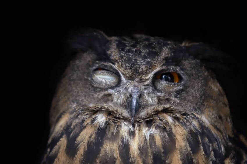 Owl is digesting all this info
